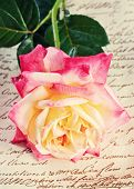 Single  Rose On Fabric Background