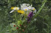 Bunch of wildflowers in blooms and wild strawberry fruits