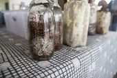 pic of millet  - mushroom fungus growing on millet in bottle - JPG