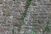 Background - Old Stone Wall With Ivy