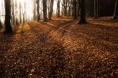 Sun shining in a forest in autumn