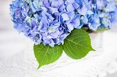 stock photo of hydrangea  - Blue hydrangea flowers in the white basket - JPG