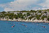 Mussels Growing In Adriatic Sea, Croatia