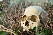 Human Skull In The Bush