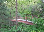 pic of wildcat  - Iron Walkway Bridge at Wildcat Canyon in Spring at Starved Rock - JPG
