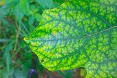 Wet leaf texture