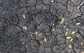 Cracked Soil With Less Plants