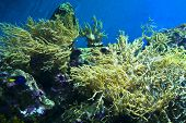 White Corals