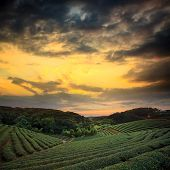 image of cameron highland  - tea plantation landscape sunset for adv or others purpose use - JPG
