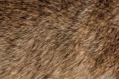 picture of gamma  - Flat long animal fure texture pattern in yellow - JPG