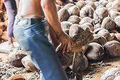 Man Shelling Coconuts