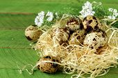 quail eggs in nest on wooden background easter still life