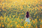 picture of sunflower  - Young woman walking away in a field of sunflowers view from her back - JPG