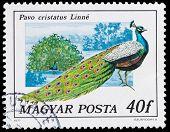 Stamp Series Birds