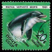 Fauna Of The Black Sea