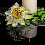 Spa Still Life Of Passiflora Flower, Green Leaf Fern With Drop And Candles On Zen Stones In Reflecti