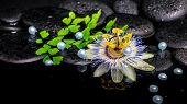 Spa Still Life Of Passiflora Flower, Branch Fern, Zen Basalt Stones With Drops And Pearl Beads In Re