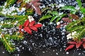 Greeting Card Of Evergreen Branches, Red Leaves And Berry With Snow, Closeup