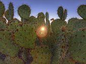 Prickly desert cactus with morning sunrise peaking through,