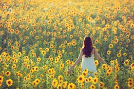 stock photo of girl walking away  - Young woman walking away in a field of sunflowers view from her back - JPG