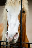 picture of brown horse  - Beautiful view of white and brown horse  - JPG
