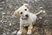 image of puppy eyes  - A cute puppy is looking up with a curious look in his eyes - JPG
