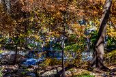 image of guadalupe  - Beautiful Small Waterfall Hidden in the Fall Foliage of the Bald Cypress Trees on the Guadalupe River - JPG