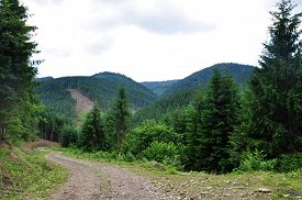 foto of long winding road  - road in the forest in the mountains - JPG
