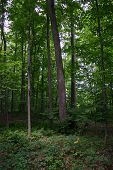 Sacred Grove In Palmyra, New York