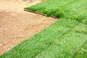 Sod Grass Field