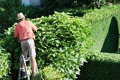 a man cutting a hedge in the garden. yard work.