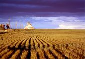 Colorado Wheat Farming