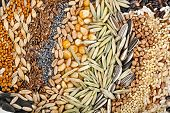 Rye, Wheat, Barley, Oat, Sunflower, Corn, Flax, Poppy, Millet, close up background