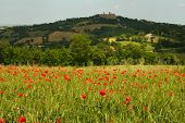 Poppy Field And Hilltop Town