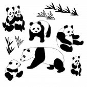 Giant Panda Collection