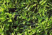 green algae texture : closes - up