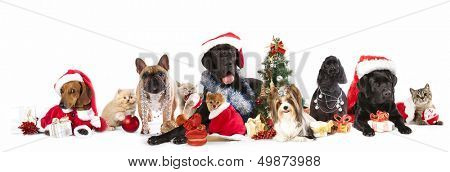 dog and  cat and kitens  wearing a santa hat poster