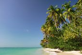 foto of west indies  - Coast line near Pigeon point  - JPG