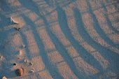 Dune Ripples 2