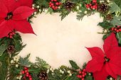 pic of poinsettias  - Poinsettia flower border with holly - JPG