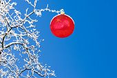 Snow Covered Branchesm Red Christmas Ornament And Crisp Clean Blue Winter Sky