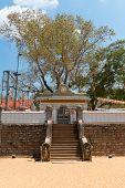Sacred Sri Maha Bodhi Tree In Anuradhapura, Sri Lanka