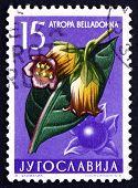 Postage Stamp Yugoslavia 1957 Belladona, Perennial Herbaceous Pl