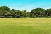 image of kensington  - the green grass field in big garden - JPG