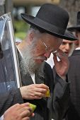 Bnei Brak - September 22: An old orthodox Jew in glasses and black hat picks citrus before the holid