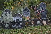 Spooky Halloween garden