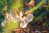 Catlike Muzzle