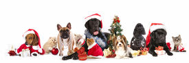 picture of puppy christmas  - dog and  cat and kitens  wearing a santa hat - JPG