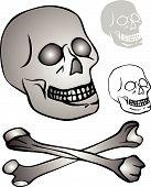 various skull