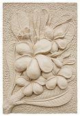 plumeria flower stucco